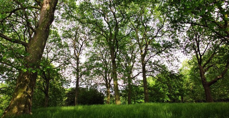 Sustainability - carbon management