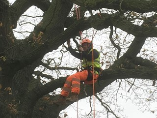 Aerial tree survey